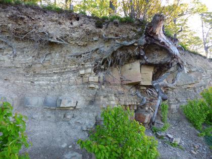 Blick auf eine mit Bäumen und Büschen bewachsene Böschung. Das obere Drittel besteht aus durchwurzeltem Erdreich, das mittlere Drittel aus teils freiliegendem, dünn gebanktem Gestein. Im rechten Bildteil bilden Steine und eine Baumwurzel eine Art Nase.