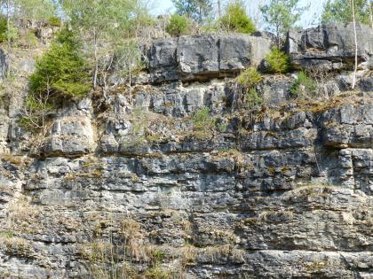 Teilansicht einer Steinbruchwand. Das graue, von Spalten und Furchen durchzogene Gestein ist mit dünnen Bäumen, Sträuchern und Moosen bewachsen.