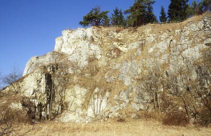 Das Bild zeigt eine hohe Steinbruchwand mit treppenartigem Ende auf der linken Seite. Das freiliegende Gestein ist weißlich grau. Die Zwischenräume sind bewachsen. Auf der Kuppe sowie am Fuß der Wand stehen Bäume.