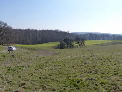 Blick auf eine leicht hügelige Grünlandschaft mit einer Bodenvertiefung im Bildmittelgrund. In der länglichen Senke stehen einzelne Bäume. Im Hintergrund verläuft ein Waldstreifen.