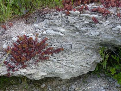 Nahaufnahme eines hellgrauen, unregelmäßig geformten Gesteinsblockes. Die Oberfläche des Gesteins ist scherbig. Links und rechts oben wachsen bräunlich rote Pflanzen.