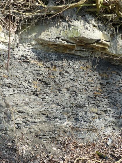Blick auf eine steil aufragende Böschung mit plattigem grauem Gestein. Im oberen Teil sind überhängende Steinblöcke sowie das Wurzelwerk von Bäumen sichtbar.