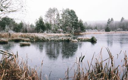 Blick auf einen von Schilfufern umgebenen See, der eine blasse, graue Farbe hat. Im Hintergrund steht Wald. Bäume und Schilf sind mit Reif bedeckt.