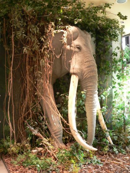 Neben einem Gebäude, zum großen Teil von Schlingpflanzen verdeckt, steht die Nachbildung eines großen Mammut mit langen Stoßzähnen.