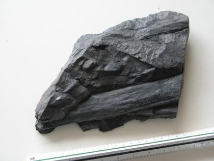 Großaufnahme eines dunkelgrauen bis schwarzen Gesteinsbrockens. Der unregelmäßig geformte Brocken hat rechts eine glatte, senkrecht verlaufende Kante und sowohl waagrechte als auch schräge Schichtungen. Reste von Pflanzen sind in das Gestein eingebettet.
