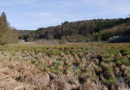Das Bild zeigt eine weite Fläche inselartig zusammengesetzte braune und grüne Grasbüschel, zwischen denen Wasser hervortritt. Im Hintergrund einzelne Häuser sowie ein nach rechts ansteigender bewaldeter Hang.