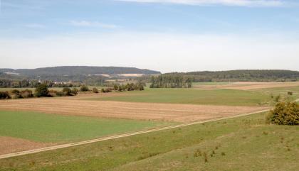 Von erhöhtem Standort blickt man über Wiesen und Äcker, die durch einen Fahrweg getrennt sind. Auf den Feldern sind Dürrespuren erkennbar. Im Hintergrund rechts steht Wald. Links erhebt sich ein flach ansteigender, bewaldeter Berg.