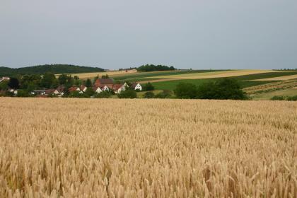 Blick über ausgedehnte Getreidefelder auf einen im Hintergrund angrenzenden, nach rechts ansteigenden Hang mit Grün- und Ackerflächen. Links versteckt sich eine tiefer liegende Siedlung hinter Bäumen.