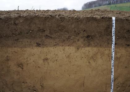 Das Foto zeigt ein Bodenprofil unter Acker. Der oberste Horizont ist etwa 35 cm mächtig und dunkelbraun. Der Horizont darunter ist heller.