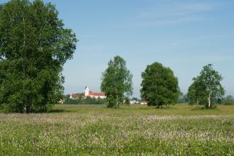 Im Vordergrund dieses Bildes liegt eine Wiese mit zahlreichen Wildblumen. Auf der Wiese stehen Birken und andere Bäume. Im Hintergrund ist eine Ortschaft mit Kirche zu erkennen.