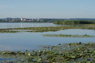 Blick auf einen größeren See. Im Vorder- und Mittelgrund sind Ansammlungen von Wasserpflanzen zu sehen, die wie Teppiche auf der Wasseroberfläche liegen. Im Hintergrund ist ein besiedeltes Ufer zu erkennen.