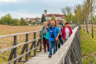 Blick auf eine kleine Besuchergruppe, die über einen hölzernen Laufsteg mit seitlichen Geländern auf den Betrachter zukommt. Der Steg führt über braun verfärbte Feuchtwiesen. Rechts stehen Birken. Im Hintergrund Häuser und eine Kirche.