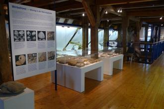 Blick in einen größeren Museumsraum. Ausgestellt sind Fossilien, Knochen und Modelle von Urzeittieren, die in Glaskästen oder auf mit Glashauben abgedeckten Tischen präsentiert werden. Rechts hinten führt eine Treppe in untere Stockwerke.