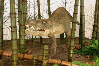 Gezeigt wird hier die Nachbildung eines auf vier Füßen gehenden, gedrungenen Sauriers mit großem Kopf und zahlreichen scharfen Zähnen. Der Raubsaurier ist in einem Museum, zwischen mehreren Schachtelhalmen, aufgestellt.
