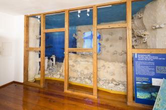 Hinter einer Abtrennung aus Holz wurde an einer Wand ein Riff nachgebildet, das Gerstetter Riff. Es zeigt den stufenartigen Aufbau des Riffes mit Besiedlung von Korallen und Schwämmen.