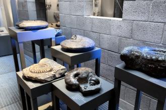 Blick auf mehrere Fossilien, die auf unterschiedlich hohen Tischen ausgestellt sind. Es handelt sich meist um Versteinerungen von Kopffüßern aus den Urzeitmeeren.