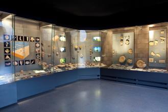 Blick auf mehrere aneinandergestellte Glasvitrinen. Die Vitrinen sind beleuchtet und stellen Fossilien zur Schau.