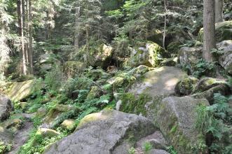Auf diesem Bild sieht man mehrere große Felsblöcke, die sich in einem Wald hangabwärts verteilen.