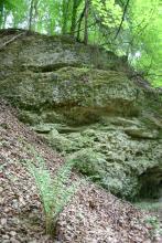 Blick auf einen im Wald liegenden felsartigen Hang, der nach rechts abfällt. Kies und Steine sind mit Erde zu einer grünlich grauen Masse vermischt.