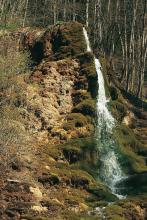 Das Bild zeigt einen kleinen, schmalen Wasserfall an einer offenen Stelle eines bewaldeten Hanges. Die vom Wasser umspülten Bereiche sind grün bemoost, die übrigen hellbraun oder dunkelbraun.