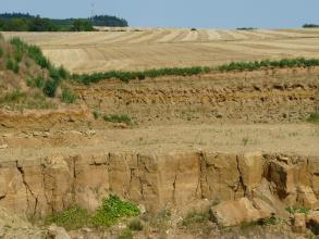 Das Bild zeigt die Wand eines Steinbruches unter abgeernteten Getreidefeldern. Die unterschiedlich gefärbten Schichten sind bis zur unteren Hälfte dünn gebankt. Darunter stehen große, von senkrechten Rissen durchzogene, rötlich braune Quader.