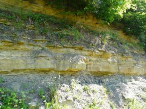 Das Bild zeigt eine aufgelassene, aus mehreren Schichten bestehende, teils bewachsene Steinbruchwand. Auf eine graue, feine Schicht unten folgen dabei gelbliche Steinblöcke in unterschiedlicher Stärke.
