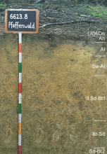 Das Foto zeigt ein Bodenprofil unter Wald. Es handelt sich um ein Musterprofil des LGRB. Das sechs Horizonte umfassende Bodenprofil ist über 1 m tief.