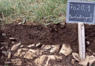 Das Foto zeigt ein Bodenprofil unter Grünland. Es handelt sich um ein Musterprofil des LGRB. Das zwei Horizonte umfassende Profil ist nur 20 cm tief.