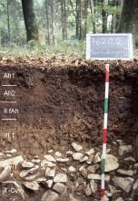 Das Foto zeigt ein Bodenprofil unter Wald. Es handelt sich um ein Musterprofil des LGRB. Das sechs Horizonte umfassende, im unteren Drittel steinige Profil ist über 80 cm tief.