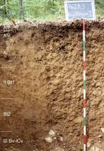 Das Foto zeigt ein Bodenprofil unter Wald. Es handelt sich um ein Musterprofil des LGRB. Das sechs Horizonte umfassende Profil ist 1,40 m tief.