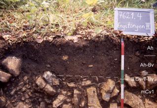 Das Foto zeigt ein Bodenprofil unter Wald. Es handelt sich um ein Musterprofil des LGRB. Das drei Horizonte umfassende, Gestein führende Profil ist 45 cm tief.