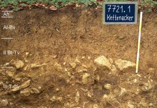 Das Foto zeigt ein Bodenprofil unter Wald. Es handelt sich um ein Musterprofil des LGRB. Das vier Horizonte umfassende Profil ist über 80 cm tief.