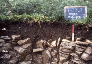 Das Foto zeigt ein Bodenprofil unter Wald. Es handelt sich um ein Musterprofil des LGRB. Das zwei Horizonte umfassende Profil zeigt schon nach 20 cm Gestein.