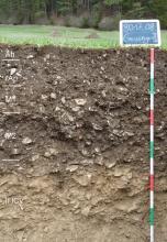 Das Foto zeigt ein Bodenprofil am Rand eines Waldes. Es handelt sich um ein Musterprofil des LGRB. Das Profil ist 1,20 m tief.
