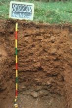 Das Foto zeigt ein Bodenprofil unter Grünland. Es handelt sich um ein ehemaliges Musterprofil des LGRB. Das Profil ist 1,20 m tief.