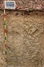 Das Foto zeigt ein Bodenprofil unter Wald. Es handelt sich um ein Musterprofil des LGRB. Das Profil ist 1,50 m tief.