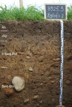 Das Foto zeigt ein Bodenprofil unter Grünpflanzen. Es handelt sich um ein Musterprofil des LGRB. Das dunkelbraune, in vier Horizonte unterteilte Profil ist etwa 1 m tief.