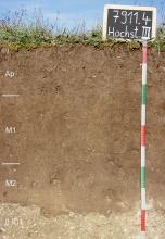 Das Bild zeigt ein Bodenprofil unter Acker. Es handelt sich um ein Musterprofil des LGRB. Das in vier Horizonte unterteilte Profil ist 95 cm tief.
