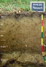 Das Foto zeigt ein Bodenprofil unter Wald. Es handelt sich um ein Musterprofil des LGRB. Das fünf Horizonte umfassende und an der Sohle steinige Profil ist etwa 90 cm tief.