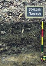 Das Foto zeigt ein Bodenprofil unter Wald. Es handelt sich um ein Musterprofil des LGRB. Das vier Horizonte umfassende Bodenprofil ist etwa 50 cm tief.