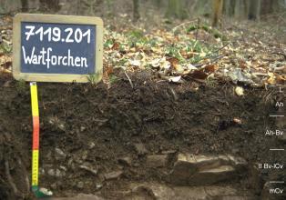 Das Foto zeigt ein Bodenprofil unter Wald. Es handelt sich um ein Musterprofil des LGRB. Das vier Horizonte umfassende Bodenprofil ist nur etwa 30 cm tief.