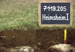 Das Foto zeigt ein Bodenprofil unter Grünland. Es handelt sich um ein Musterprofil des LGRB. Das zwei Horizonte umfassende Profil ist nur etwa 20 cm tief.
