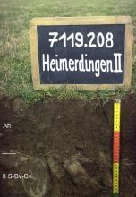 Das Foto zeigt ein Bodenprofil unter Wald. Es handelt sich um ein Musterprofil des LGRB. Das zwei Horizonte umfassende Bodenprofil ist nur 30 cm tief.