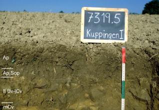 Das Foto zeigt ein Bodenprofil unter Acker. Es handelt sich um ein Musterprofil des LGRB. Das vier Horizonte umfassende Bodenprofil ist nur etwa 35 cm tief.