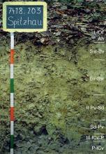 Das Foto zeigt ein Bodenprofil unter Wald. Es handelt sich um ein Musterprofil des LGRB. Das sieben Horizonte umfassende Bodenprofil ist über 80 cm tief.