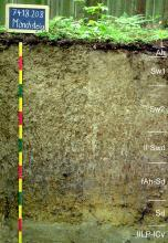 Das Foto zeigt ein Bodenprofil unter Wald. Es handelt sich um ein Musterprofil des LGRB. Das sieben Horizonte umfassende Bodenprofil ist etwa 1,30 m tief.