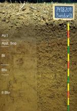 Das Foto zeigt ein Bodenprofil unter Acker. Es handelt sich um ein Musterprofil des LGRB. Das fünf Horizonte umfassende Bodenprofil ist über 1 m tief.