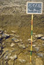 Das Foto zeigt ein Bodenprofil unter Acker mit Pflanzenresten. Es handelt sich um ein Musterprofil des LGRB. Das in der unteren Hälfte steinige Profil ist etwa 1 m tief.