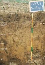 Das Foto zeigt ein Bodenprofil unter Acker mit Pflanzenresten. Es handelt sich um ein Musterprofil des LGRB. Das an der Sohle steinige Profil ist über 1 m tief.