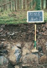 Das Foto zeigt ein Bodenprofil unter Wald. Es handelt sich um ein Musterpofil des LGRB. Das in der unteren Hälfte sehr steinige Bodenprofil ist etwa 60 cm tief.